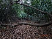 52 倒木を越えるDSC03539.JPG