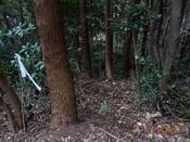 58 木の間を縫ってDSC03549.JPG