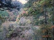 75.林道沿いの風景DSC01208.JPG