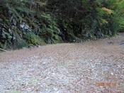 77.落葉散り敷く林道DSC01210.JPG
